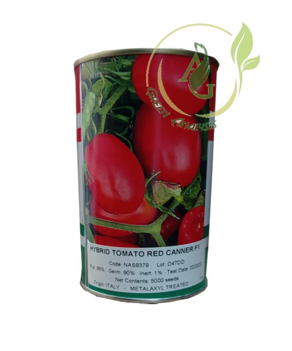 بذر گوجه فرنگی هیبرید ردکانر