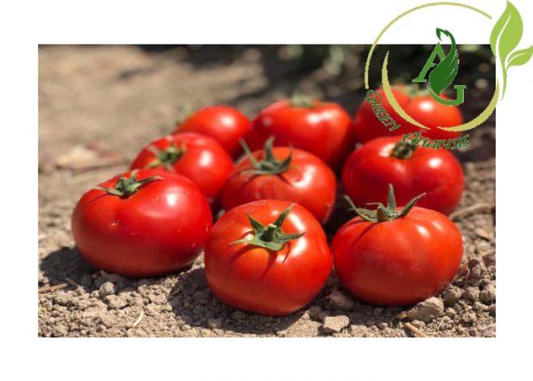 بذر گوجه فرنگی هیبرید دالاهو
