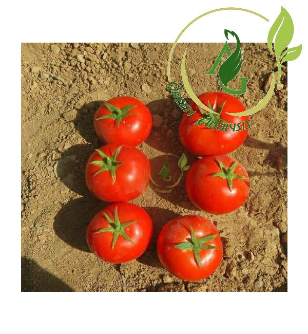 بذر گوجه فرنگی هیبرید کارون نیکرسون