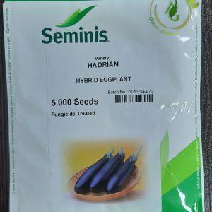 بذر بادمجان هیبرید هادریان 1