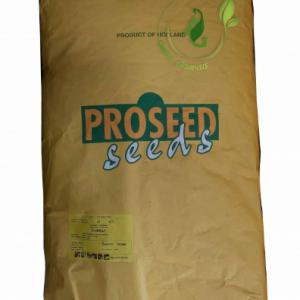 بذر لوبیا سبز سان ری پروسید