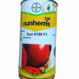 بذر گوجه فرنگی هیبرید 6189