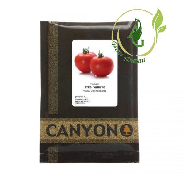 بذر گوجه فرنگی ساتورنو